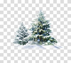 pohon berdaun hijau, beruang kutub Snow Pine, Christmas Snow Tree Creative png
