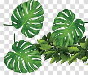 Templat Daun Rxe9sumxe9, tanaman hijau daun tropis, daun tanaman hijau png