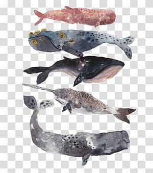 aneka warna-dan-jenis paus, Paus Sperma Lukisan Cat Air Ilustrasi, sampel ikan hiu png