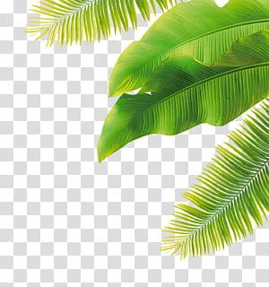 Bunga Buah, daun hijau, daun pisang hijau dan daun pohon kelapa png