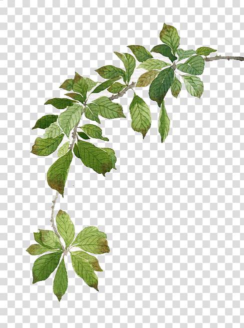 ilustrasi daun hijau, lukisan cat air, daun hijau cat air png