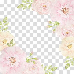 Bunga merah muda Beach rose, Perbatasan bunga, perbatasan merah muda dan krem png