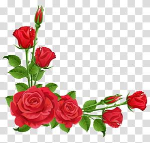 Taman bunga, Tanaman tahunan, Mawar Merah, bingkai mawar merah png