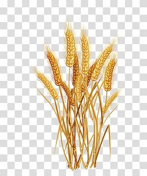 brown wheat art, Common sereal Sereal Telinga, beras png