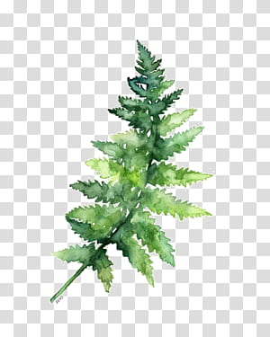 Kertas Cat Air lukisan Pencetakan Pakis, Daun hijau, dekorasi daun hijau PNG clipart