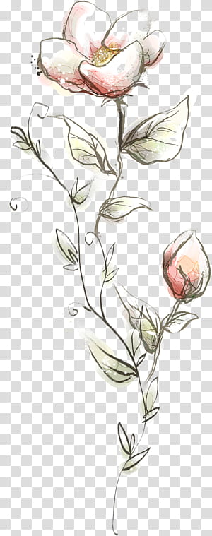 Bunga, Bunga, bunga, bunga poppy merah muda dengan latar belakang biru png