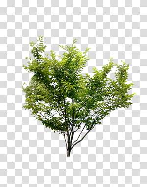 menanam pohon semak png