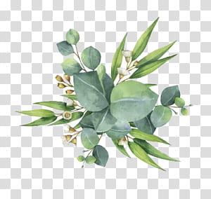 Pohon karet Bunga Daun Euclidean, Cat air daun hijau, tanaman daun hijau PNG clipart