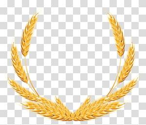 Gandum, Dekorasi Gandum, karangan bunga gandum kuning png