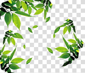 bingkai tanaman berdaun hijau, Ikon Daun, teh, teh, Daun, daun, daun Mengambang png
