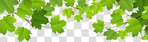 Daun, Daun Hias, tanaman berdaun hijau PNG clipart