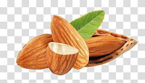 ilustrasi almond coklat, Kacang Almond Buah kering, kacang almond png