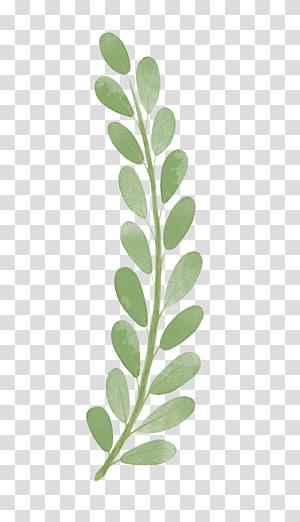 berdaun hijau, Cabang, daun Cat Air png