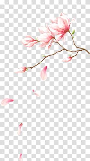 Merah muda kelopak bunga File komputer, Bunga dengan kelopak jatuh, ilustrasi kelopak bunga merah muda png