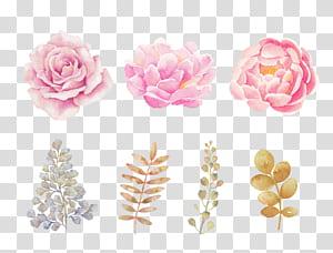 Bunga merah muda Bunga merah muda Lukisan cat air, Bunga cat air merah muda yang dilukis dengan tangan, tiga mawar merah muda dan peony png