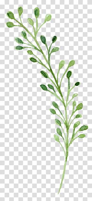 Lukisan cat air hijau, bunga cat air, lukisan tanaman hijau png