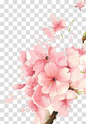 Bunga Cat Air Lukisan cat air Gambar, Bunga cat air, ilustrasi bunga merah muda png