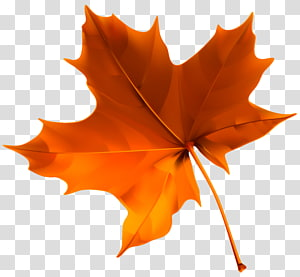 Warna daun musim gugur, Autumn Red Leaf, daun maple oranye PNG clipart