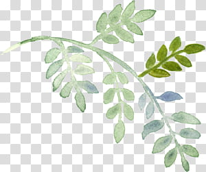 Lukisan Cat Air Tumbuhan, daun cat air yang dilukis dengan tangan, closeup tanaman daun hijau PNG clipart