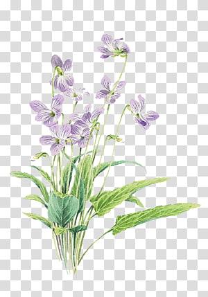 Bunga ungu kecil segar dicat, bunga ungu mekar png