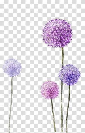 Kertas, Dandelion Ungu, bunga dandelion ungu dan ungu png