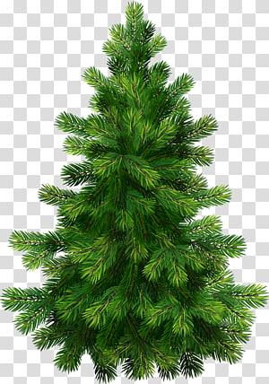 Pine Tree, Pine Tree, ilustrasi pohon Natal hijau PNG clipart