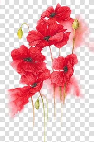 Lukisan Cat Air Bunga Jeruk, Merah, Kuning, Ilustrasi bunga merah yang dilukis dengan tangan, lukisan bunga kelopak merah png
