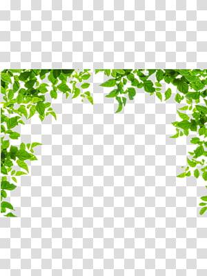 Perbatasan dan Bingkai Daun Hijau, Batas daun hijau, daun hijau png