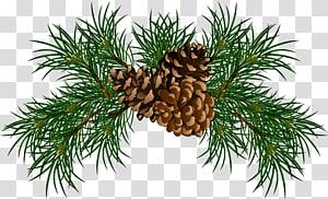 Pine Conifer cone Branch, Cabang Pine dengan Kerucut Pinus, ilustrasi biji pinus coklat png
