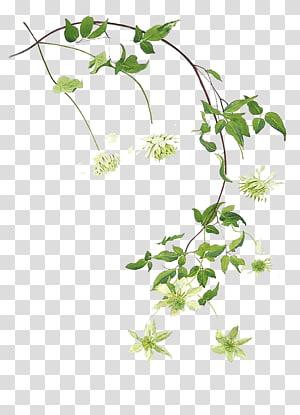 ilustrasi bunga putih dan hijau, lukisan Cat Air Seni Daun lukisan, Cat air hijau daun PNG clipart