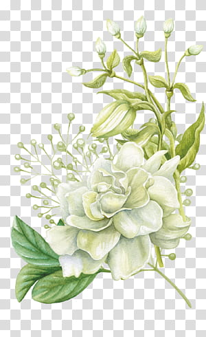 Lukisan cat air Bunga desain Bunga, Bunga cat air yang dilukis dengan tangan, lukisan bunga mawar putih png