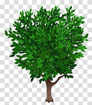 ilustrasi pohon hijau dan coklat, Pohon, Pohon png