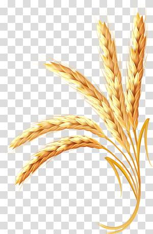 ilustrasi animasi gandum, Sereal Telinga Gandum, Gandum emas png