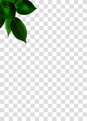 ilustrasi daun hijau, Pola Sudut Daun Hijau, Daun png