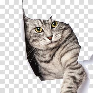 Kucing besar Kitten Dog Pet pintu, kucing peliharaan, kucing perak kucing di lubang png