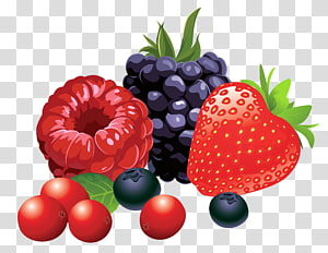Ilustrasi Buah Berry, Buah Hutan, raspberry, strawberry, dan blackberry PNG clipart