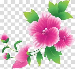 Bunga merah muda, Bunga Merah Muda Besar, ilustrasi bunga petaled merah muda png