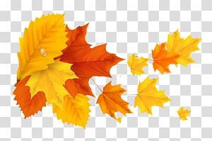 daun maple kuning dan merah, warna daun musim gugur, Daun Jeruk Jingga Kuning PNG clipart