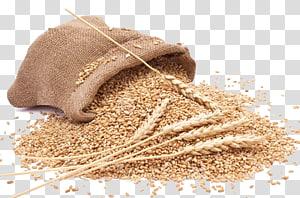 biji-bijian, Tepung gandum utuh Makanan Sereal, gandum png