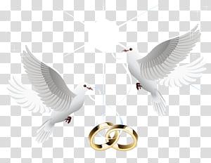 Cincin kawin Cincin kawin, cincin kawin, ilustrasi dua merpati png