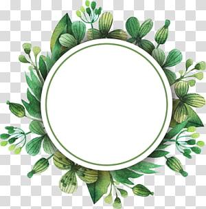 ilustrasi bunga bulat putih dan hijau, Bunga Tulip, Perbatasan daun hijau dicat png