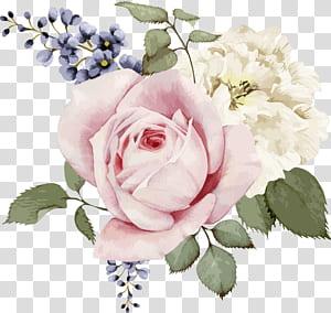 Bunga Mawar ilustrasi Bunga, Mawar merah muda dan mawar putih cat air bunga yang dilukis dengan tangan, ilustrasi bunga merah muda, putih, dan biru png