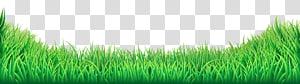 Rumput, Rumput, rumput hijau png