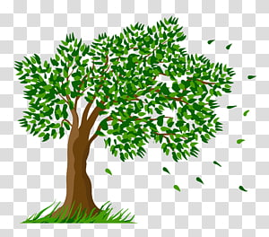 ilustrasi pohon hijau, Pohon, Pohon png