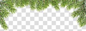 ilustrasi bingkai tanaman berdaun hijau, daun png