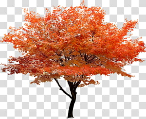 Red maple Tree, Autumn red tree berdiri pemandangan PNG clipart