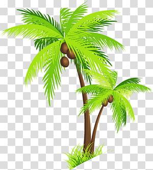 Kelapa Arecaceae, Pohon Kelapa dengan Kelapa, dua ilustrasi pohon berdaun hijau png