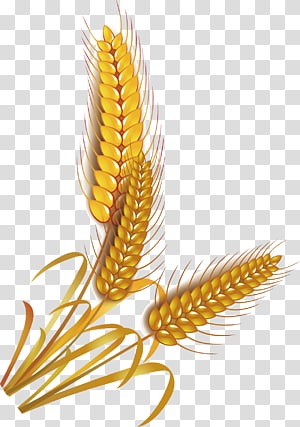 ilustrasi gandum merah, Gandum Sereal Beras Gandum, beras png