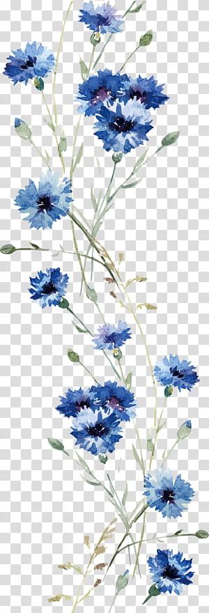 Flower Wall decal, Anggrek Cat Air, lukisan bunga jagung biru png