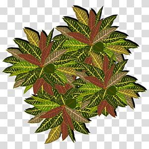 ilustrasi tanaman crotons hijau, Pohon, tampilan atas pohon png